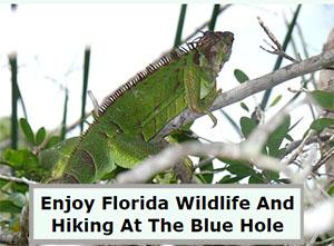 The Blue Hole Big Pine Key